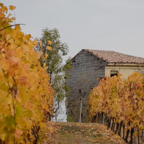 365 Monferrato